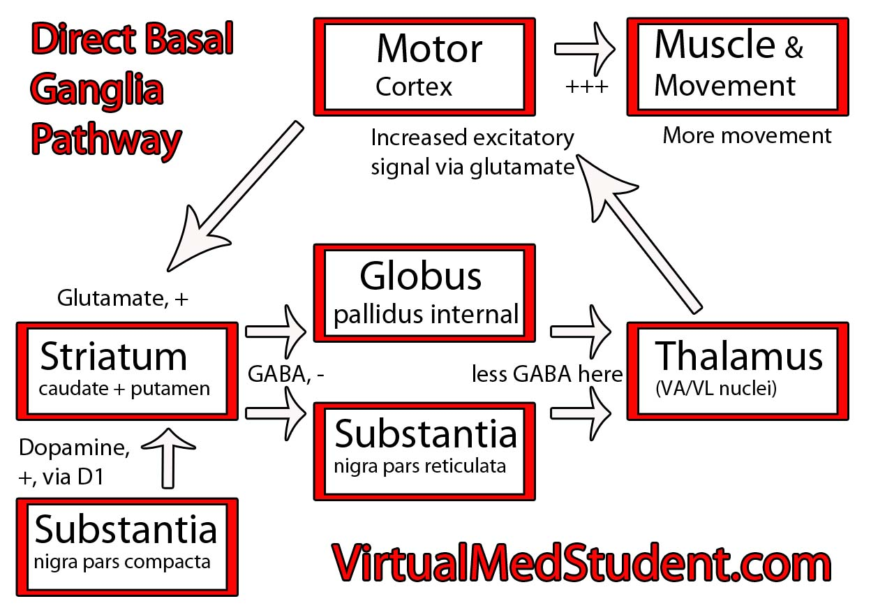 VirtualMedStudent.com || Basal Ganglia Direct Pathway